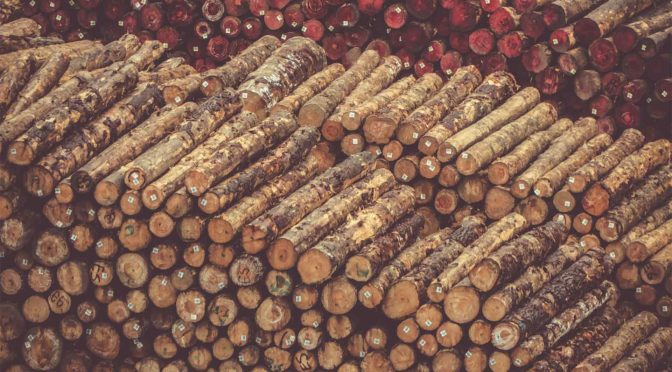 Learn more about timber fraud and theft