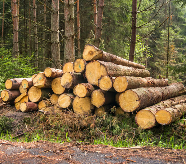 About Timber Resource Management