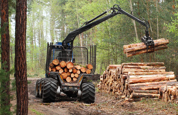 Security Management in Forest Products