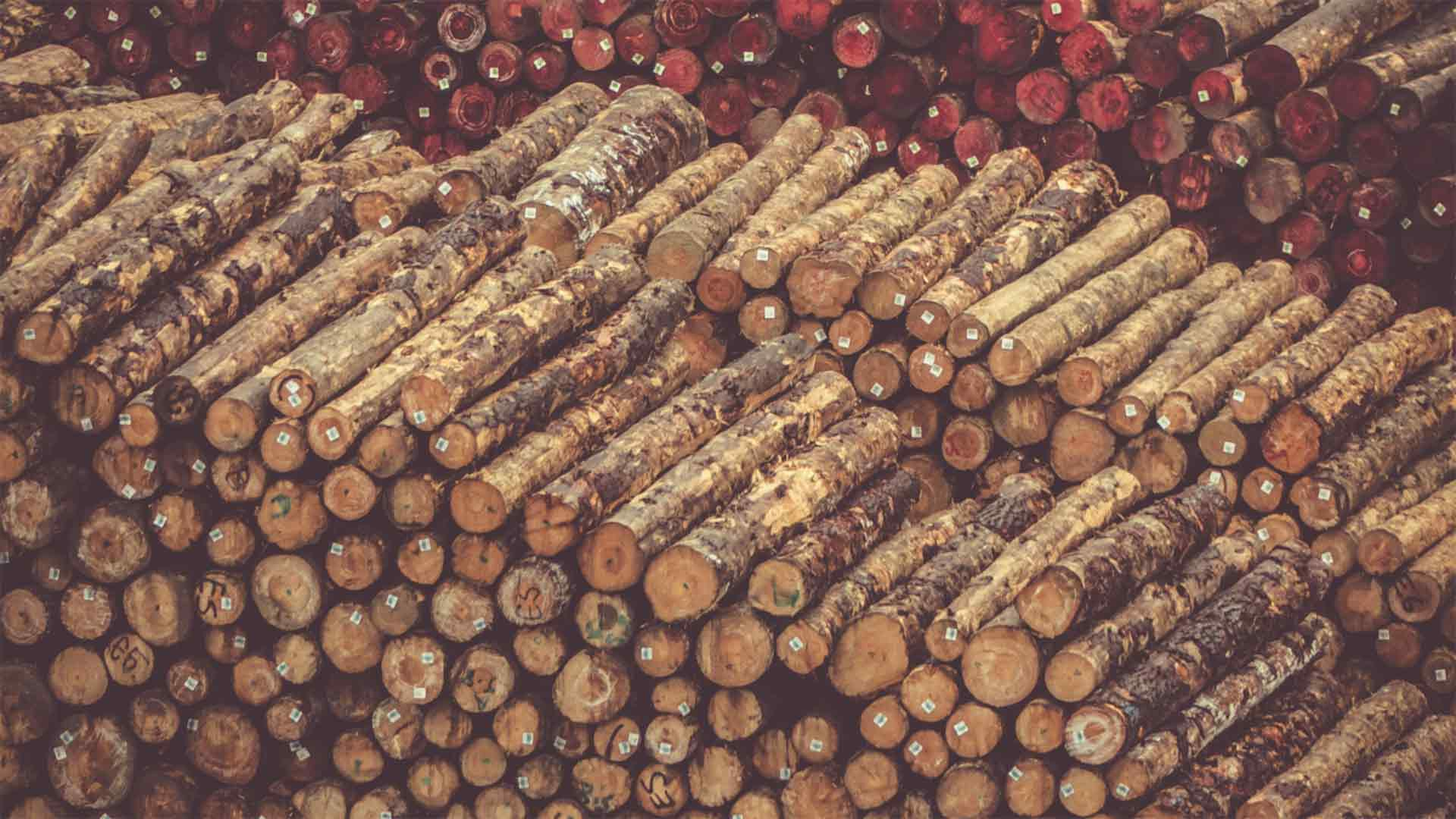 Is Timber Theft Really a Problem?