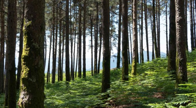 Good contracts can help ensure your forest lands are managed well.