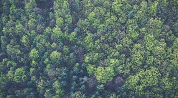 Satellite surveillance of timberland
